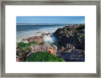 Orange Starfish Framed Print