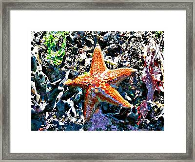 Framed Print featuring the photograph Orange Starfish by 'REA' Gallery