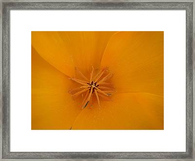 Orange Sunburst Framed Print