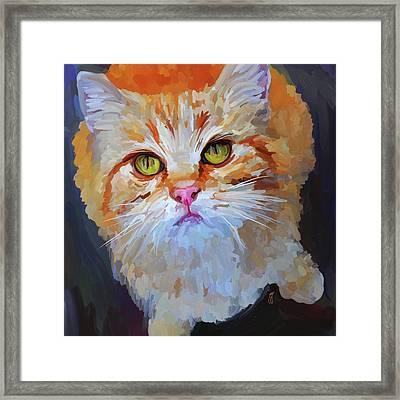 Orange Tabby Cat - Square Framed Print by Jai Johnson