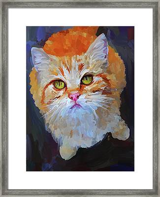 Orange Tabby Cat Framed Print by Jai Johnson