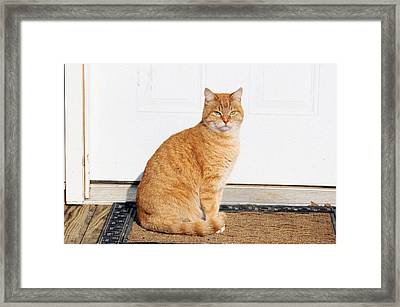Framed Print featuring the digital art Orange Tabby Cat by Jana Russon
