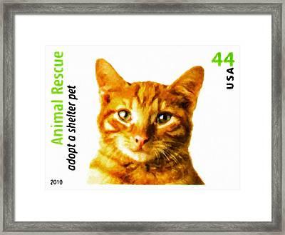 Orange Tabby Cat Framed Print by Lanjee Chee