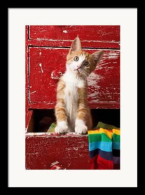 Cat Paw Framed Prints