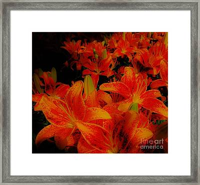 Spicey Tiger Lilies Framed Print