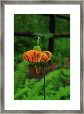 Framed Print featuring the photograph Orange Tiger Lily by Tikvah's Hope