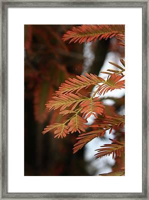 Orange Tinted Glow Framed Print by Amanda Wimsatt