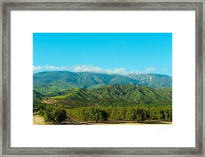 Orange Tree Grove, Santa Paula, Ventura Framed Print by Panoramic Images