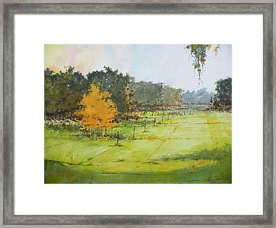 Orange Tree In Pasture Land Framed Print by Lionel Sanchez