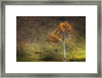 Framed Print featuring the photograph Orange Tree by Ken Barrett