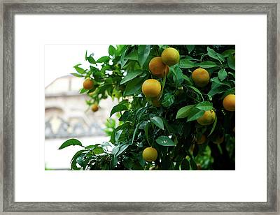 Framed Print featuring the photograph Orange Tree by Lorraine Devon Wilke