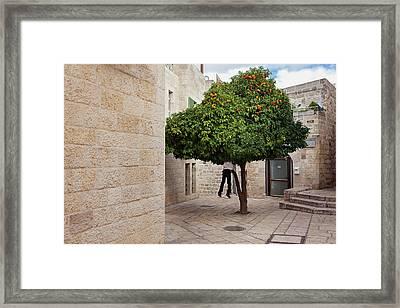 Orange Tree Framed Print by Marji Lang