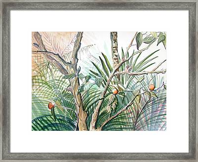 Orange Tree Framed Print by Mindy Newman