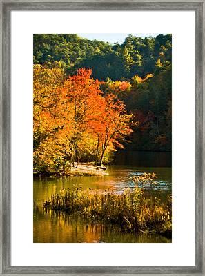 Orange Tree Framed Print by Paul Bartoszek