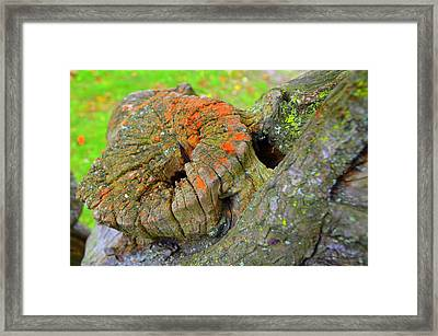 Orange Tree Stump Framed Print