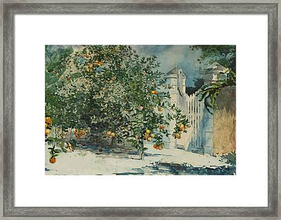 Orange Trees And Gate Framed Print by Winslow Homer
