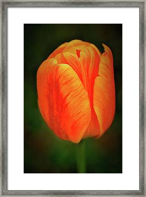 Framed Print featuring the photograph Orange Tulip Painting Neo Rembrandt Style by Matthias Hauser