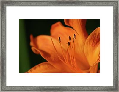 Orange Wave 3096 H_2 Framed Print