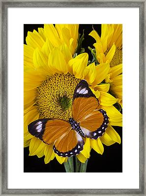 Orange White Tipped Butterfly Framed Print