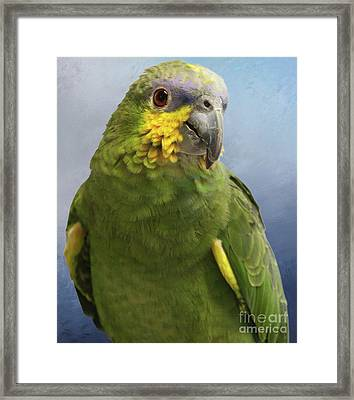 Orange Wing Amazon Parrot Framed Print by Victoria Harrington