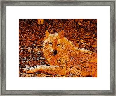 Orange Wolf Framed Print by Sandy Keeton