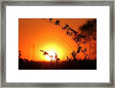 Orange Wonder Framed Print