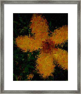 Orange-yellow Flower Framed Print by April Patterson