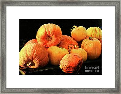 Orange Yellow Pumpkins Framed Print