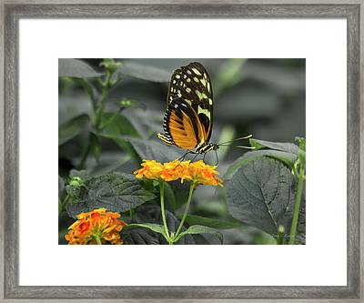 Orange You Beautiful Framed Print by Betsy Knapp