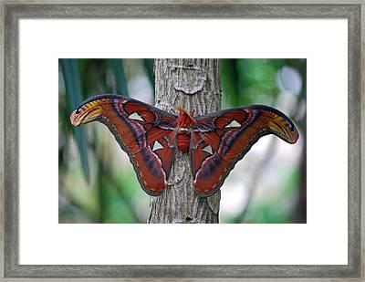 Orange You Lovely Framed Print by Teresa Blanton