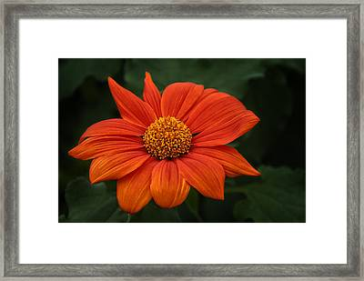 Orange You Pretty Framed Print