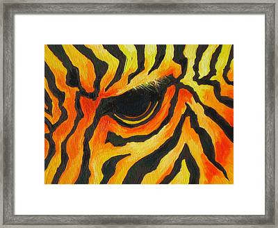 Orange Zebra Framed Print by Sandy Tracey