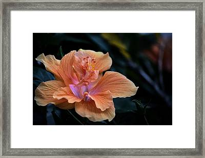 Orangecicle Framed Print