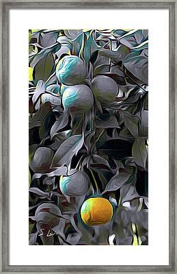 oranges 01 ...46.15 HDR art Framed Print