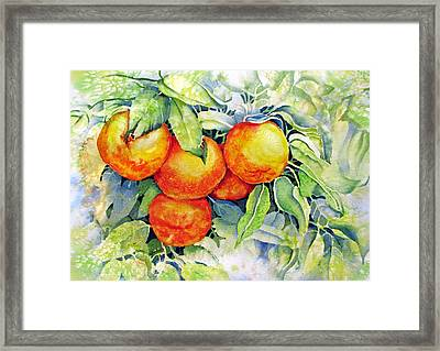 Oranges-in-italy Framed Print by Nancy Newman