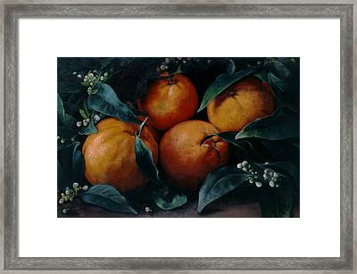 Oranges Framed Print by Kira Weber