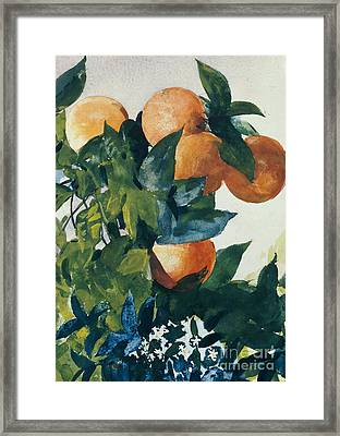 Oranges On A Branch Framed Print by Winslow Homer