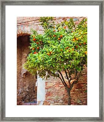 Orangetree Framed Print by Lutz Baar