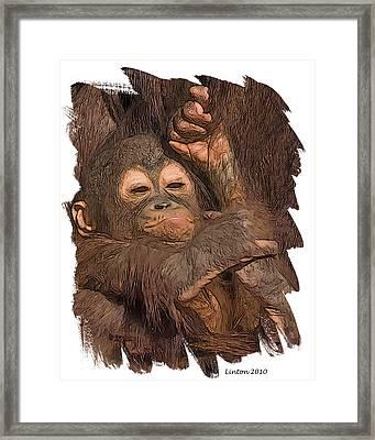 Orangutan Baby Framed Print