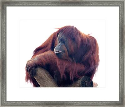 Orangutan - Color Version Framed Print by Lana Trussell