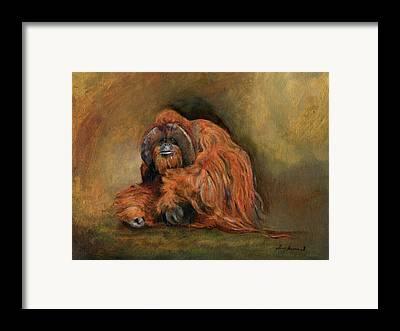 Orangutan Framed Prints