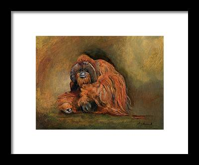 Orangutan Framed Prints