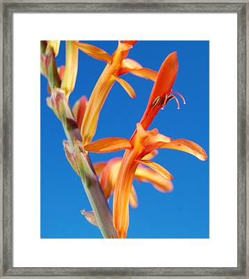 Orang'ya Glad Framed Print by Jean Booth