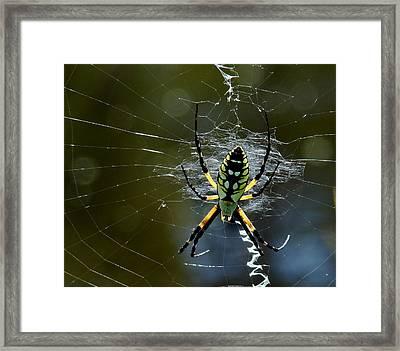 Orb-weaver 2 Framed Print
