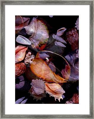 Orbiting Seashells Framed Print by Lynda Lehmann