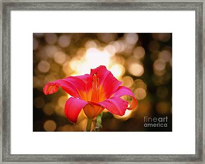 Orbs All Around Framed Print by Lydia Holly