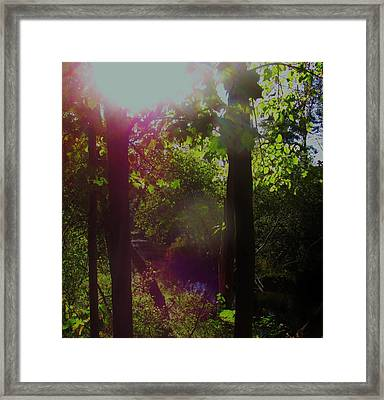 Orbs In The Forest Framed Print