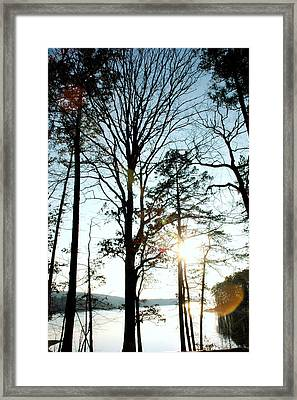 Orbs In The Trees Framed Print
