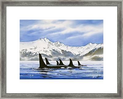 Orca Framed Print by James Williamson