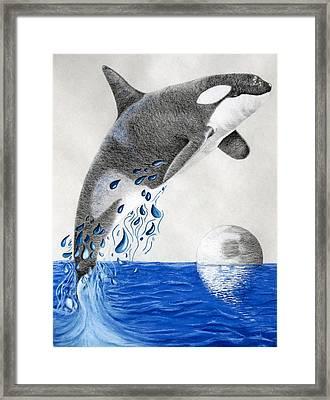 Framed Print featuring the drawing Orca by Mayhem Mediums